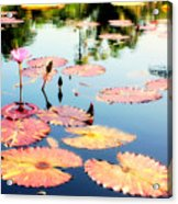 Naples Botanicals  Acrylic Print