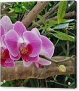Naples Orchid 1 Acrylic Print