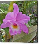 Naples Orchid 3 Acrylic Print