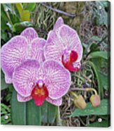 Naples Orchid 4 Acrylic Print