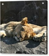 Naptime For The Twins Acrylic Print