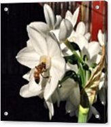 Narcissus And The Bee 1 Acrylic Print by Daniele Smith