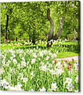 Narcissus In Apple Garden Acrylic Print