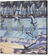Narrabeen Lakes 2 Acrylic Print