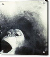 Nasa Chimpanzee, 1961 Acrylic Print