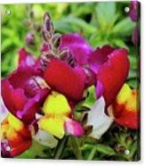 Nascent Blossoms  Acrylic Print