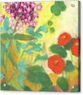 Nasturtiums, Rose Milkweed And Rue Acrylic Print