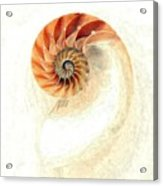Natilus Acrylic Print