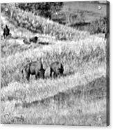National Bison Range Wildlife Refuge Mt Usa Acrylic Print