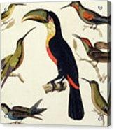 Native Birds, Including The Toucan From The Amazon, Brazil Acrylic Print