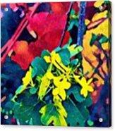 Native Plants Become Art.  Acrylic Print