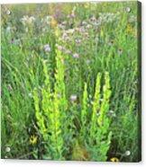 Native Prairie In Moraine Hills State Park Acrylic Print