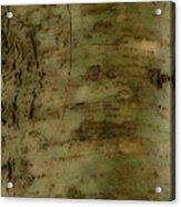 Native Tree Acrylic Print