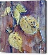 Native Yellow  Acrylic Print