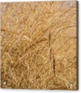Natural Abstracts - Elaborate Shapes And Patterns In The Golden Grass Acrylic Print