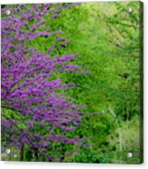 Natural Background Acrylic Print