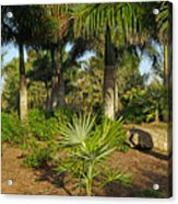 Natural Beauty Of Florida Acrylic Print
