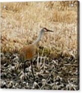 Natural Camouflage Acrylic Print