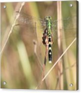 Natural Canvas With Dragonfly Acrylic Print