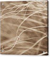 Natural Curls Acrylic Print