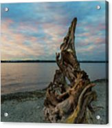 Natural Driftwood At Birch Bay State Park Acrylic Print