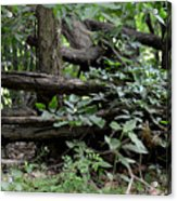 Natural Wood Fence Acrylic Print