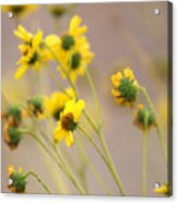 Natural Flowers Acrylic Print
