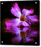 Natural Mirror  Acrylic Print