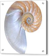 Natural Nautilus On White Vertical Acrylic Print
