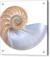 Natural Nautilus Seashell On White Acrylic Print