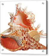 Natural Shell Collection On White Acrylic Print