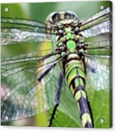 Natural Stained Glass Acrylic Print