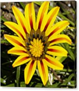Natural Sun Shine Acrylic Print