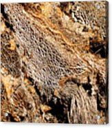 Natural Textural Abstract Acrylic Print
