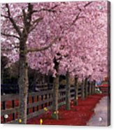 Nature - Pink Trees Acrylic Print