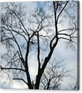 Nature - Tree in Toronto Acrylic Print