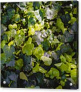 Nature Abstract 5 Acrylic Print