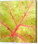 Nature Abstract Sea Grape Leaf Acrylic Print