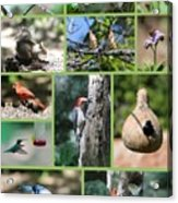 Nature Collage Acrylic Print