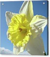 Nature Daffodil Flowers Art Prints Spring Nature Art Acrylic Print