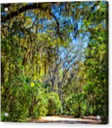 Nature Drive Acrylic Print
