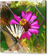 Butterfly In Love Acrylic Print