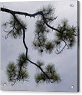Nature Frame Acrylic Print