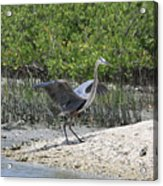 Nature In Florida Acrylic Print