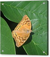 Nature In The Wild - A Green Haven Acrylic Print