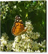 Nature In The Wild - A Light In The Darkness Acrylic Print