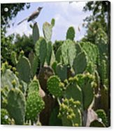 Nature In The Wild - A Prickly Perch Acrylic Print