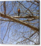 Nature In The Wild - Annoucing Spring Acrylic Print