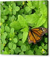 Nature In The Wild - Beautiful Solitude Acrylic Print