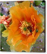 Nature In The Wild - Cactus Honey Acrylic Print